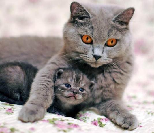 alasan induk kucing menggigit anaknya