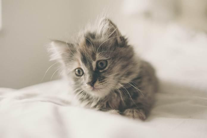 cara mudah menjaga kucing