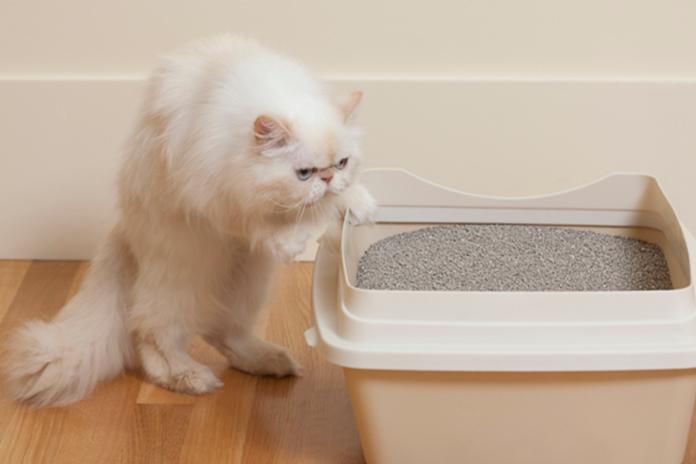 jenis pasir untuk pup kucing