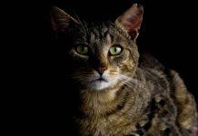 kesalahpahaman tentang kucing