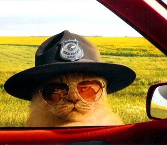 kucing ikut audisi jadi polisi