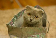 masalah awal setelah adopsi kucing