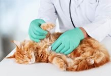 penyebab utama penyakit ginjal pada kucing
