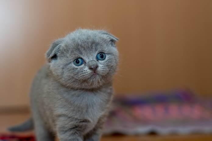 tips membuat kucing cepat beradaptasi