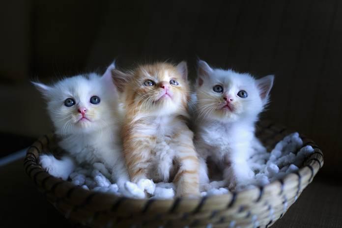 tips merawat anak kucing terlantar