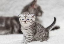 menyapih anak kucing