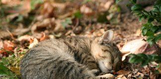 alasan kucing suka meringkuk