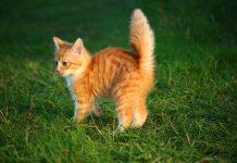 memahami suara anak kucing