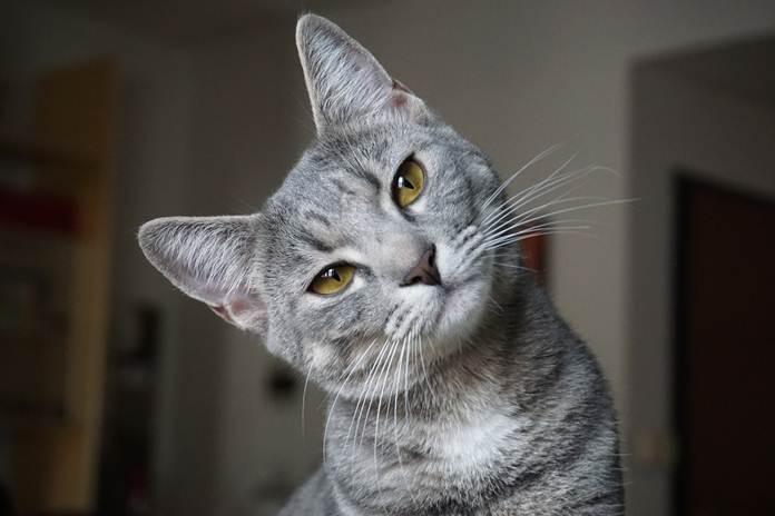 game untuk kucing
