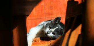 Kucing Ditinggal Saat Liburan