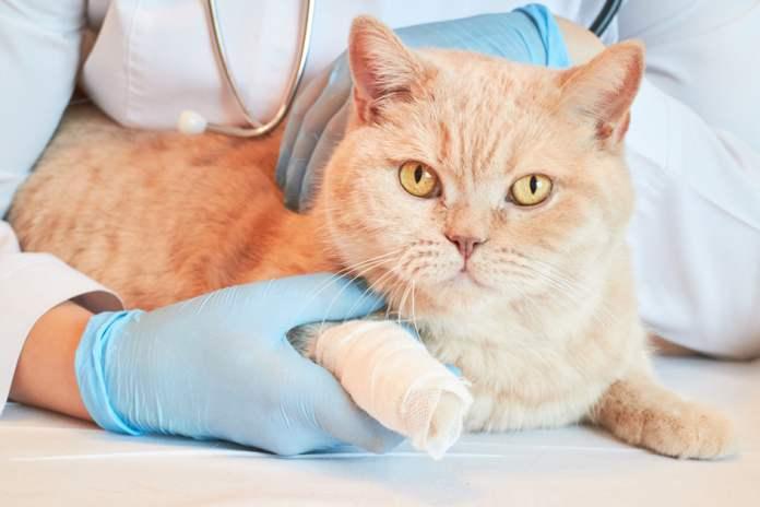 kucing check-up rutin ke dokter