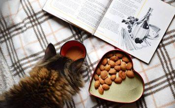 penyajian makanan kucing