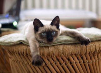 kucing ini tetap imut walau sudah tua