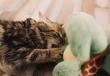 gigitan kucing