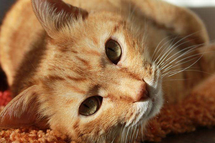 masalah kencing pada kucing