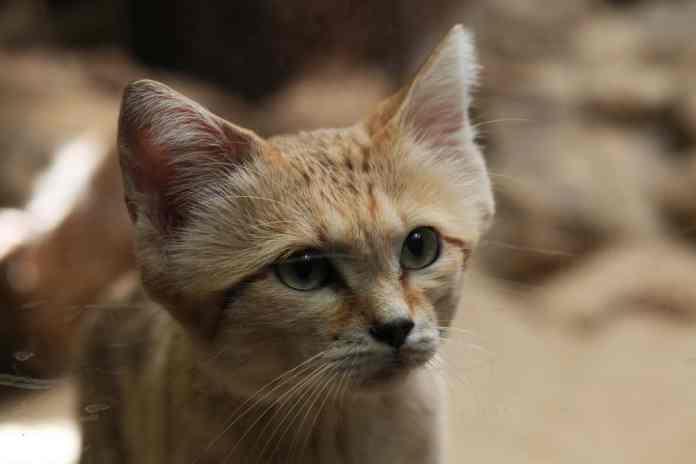 kucing liar yang imut