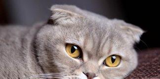 alergi kucing