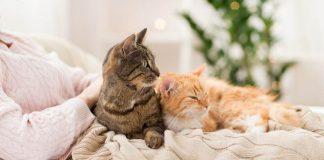 mengajak kucing tidur di kasur