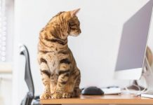 kucing jadi obat stres