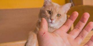 kucing tak terawat
