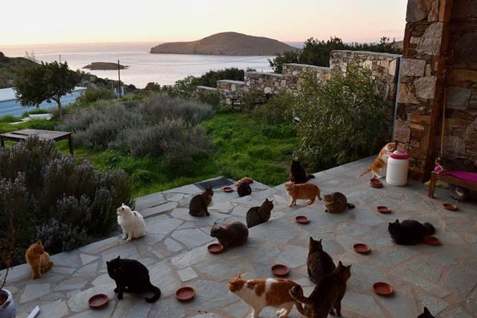 pulau kucing di Yunani