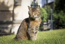 kucing Katedral London