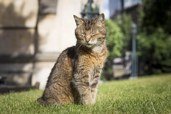 kucing Katedral London