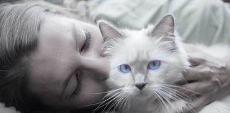 pencinta kucing
