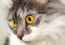 kucing memahami hukum dasar fisika