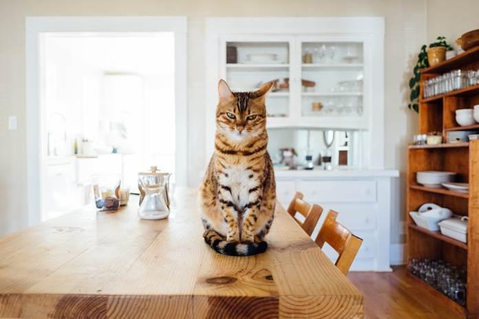 Tingkah kucing