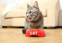 makanan kucing rasa ikan