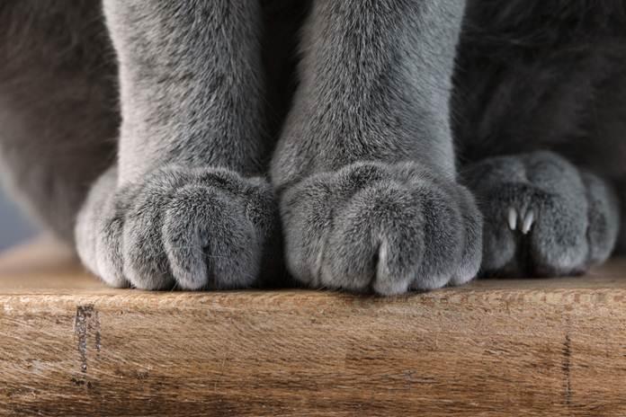 dicakar kucing
