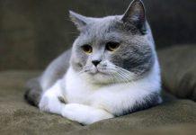 kucing cuek