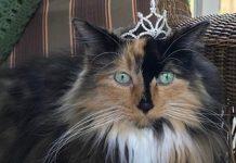 kucing jadi Wali Kota