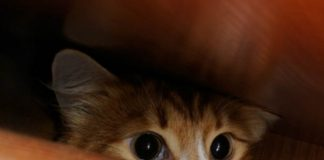 Seekor kucing