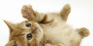 fakta-fakta unik kucing