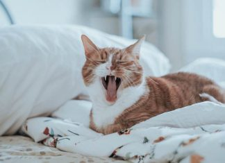 tanda kucing terkena rabies