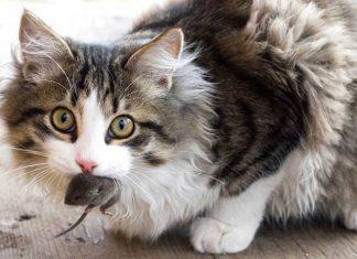 kucing zaman sekarang