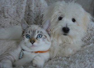 anjing dan kucing
