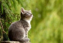ingatan kucing