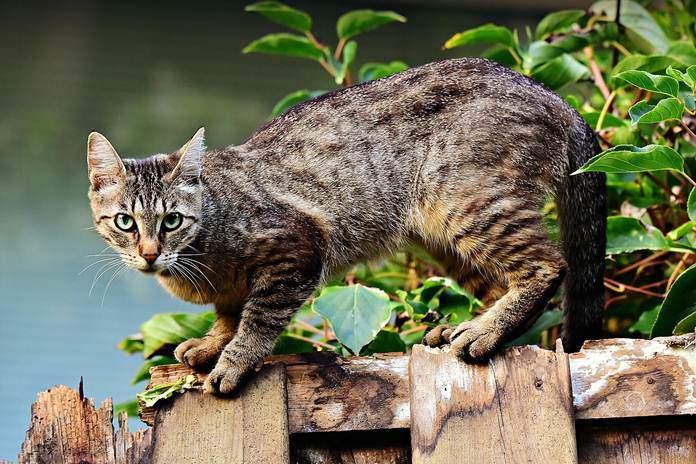 alasan kucing selalu menoleh