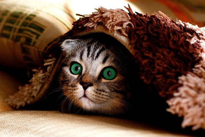 tempat persembunyian kucing