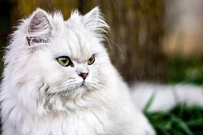 Warna bulu kucing