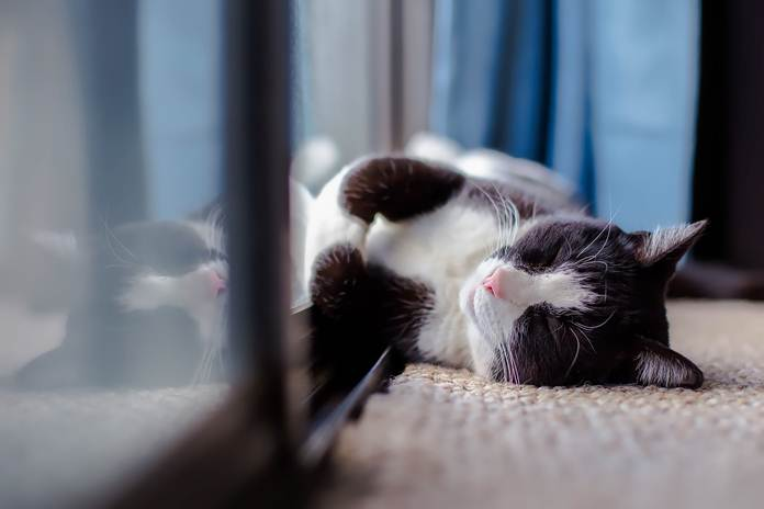 Rumah kucing parung