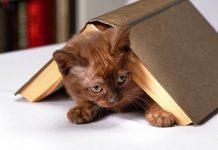 kucing hobi menjatuhkan benda