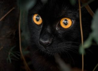 mitos kucing