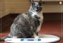 kucing paling gemuk di Inggris