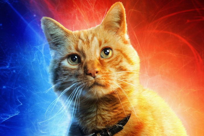 karakter kucing di film Captain Marvel