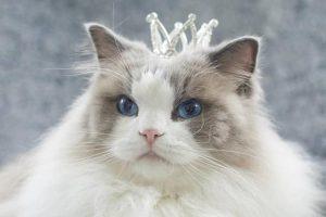 kucing paling terkenal di Instagram