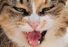 usia kucing